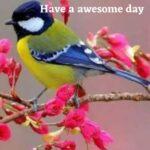 birds good morning photos