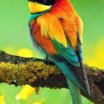 birds good morning photos for whatsapp