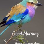 good morning with birds images