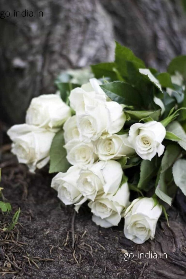 a beautiful bunch of white rose