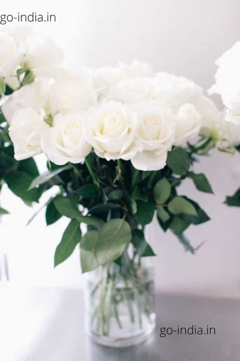 a bouque of preety white rose