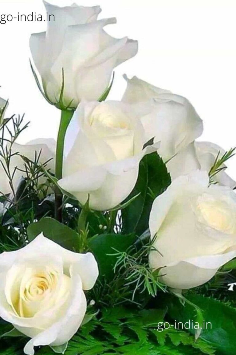 a bunch of lovely white rose