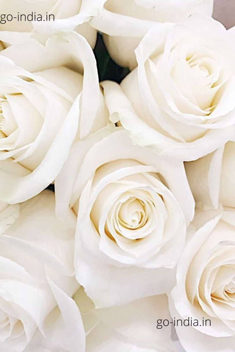 a lovely bouque of white rose