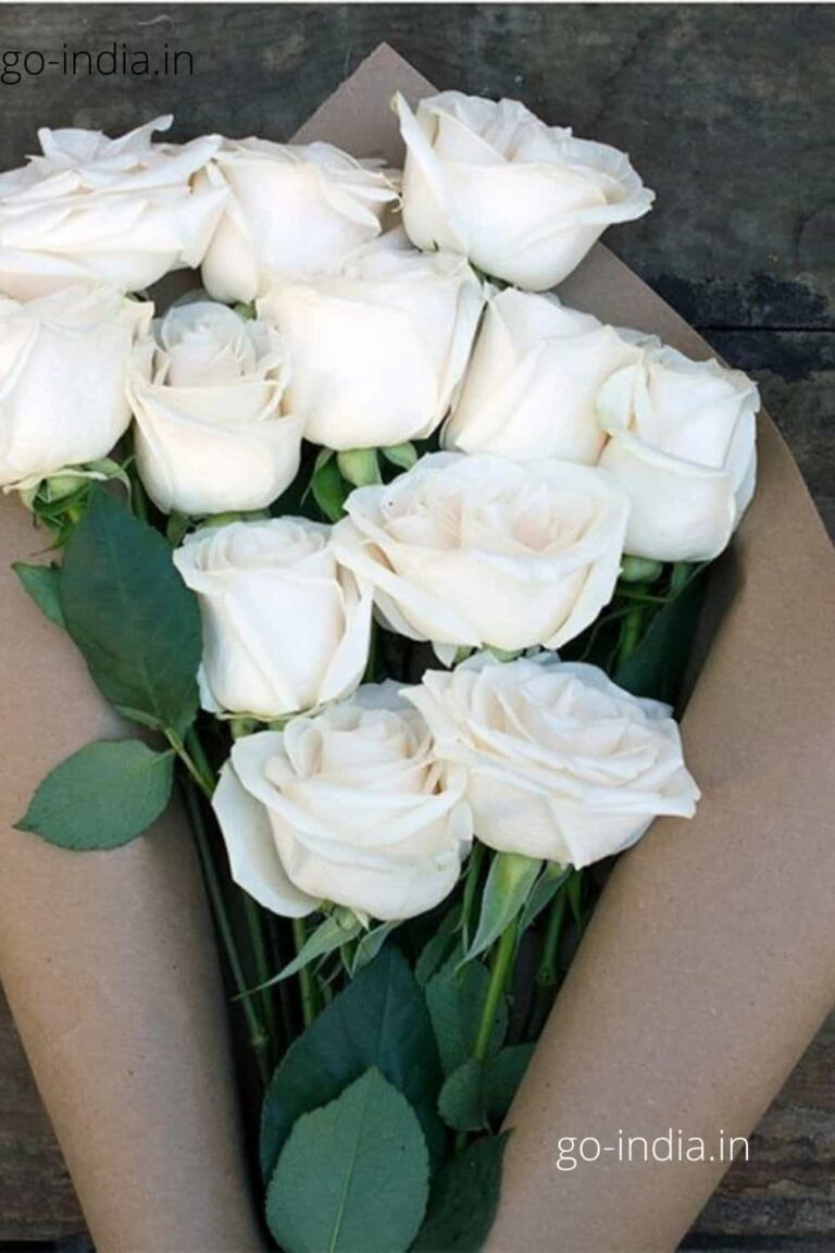 a lovely bunch of white rose