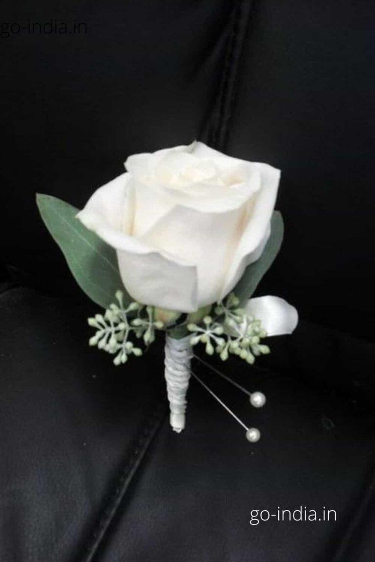 a lovely white rose