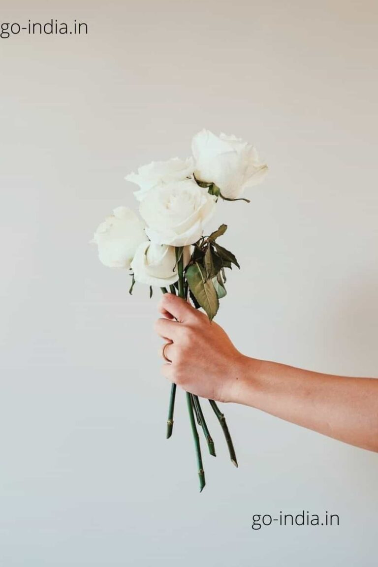 a lovely white rose in somebody's hand