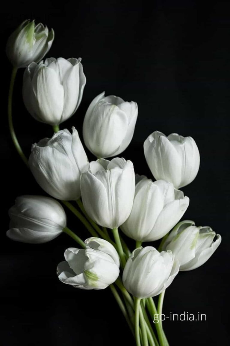 a preety bunch of white rose
