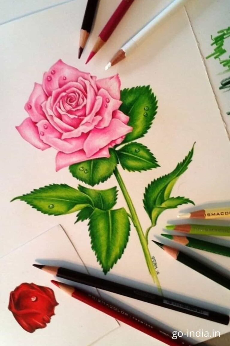 beautiful images of pink roses free download