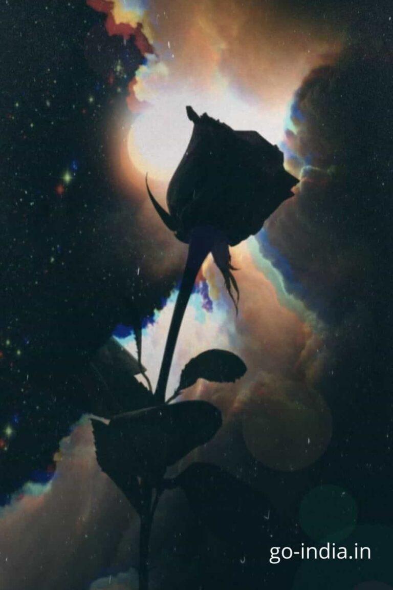 black rose with dark sky