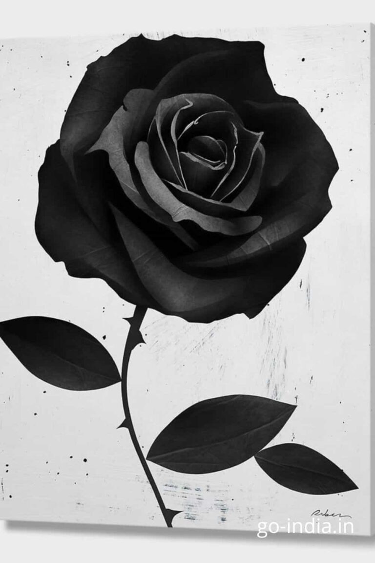 black rose with with HD wallpaper