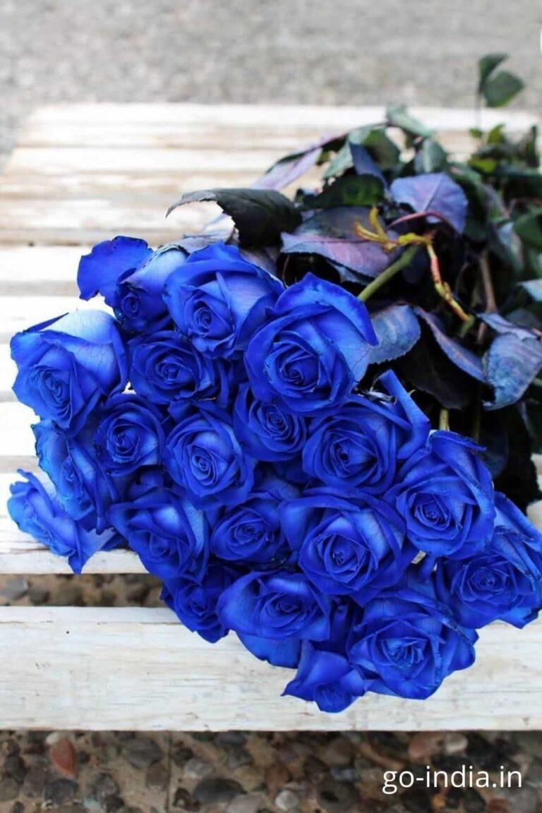 blue rose flower wallpaper hd