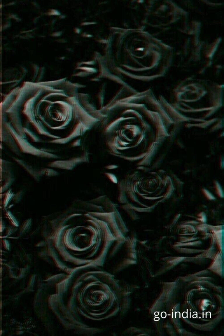 bouque of lovely black rose