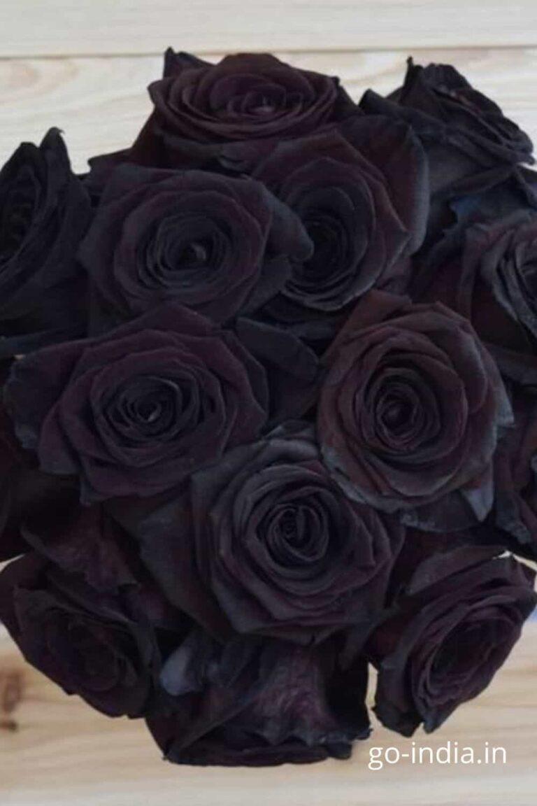 bunch of black rose