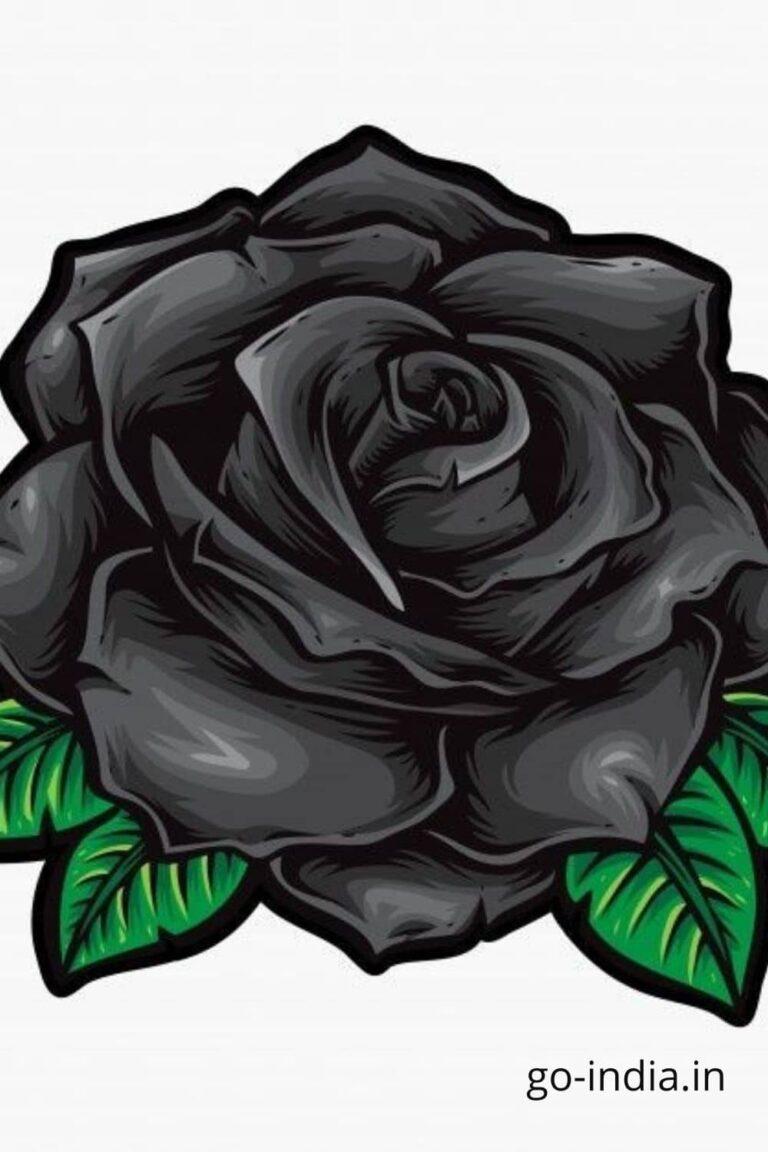 drawing of black rose