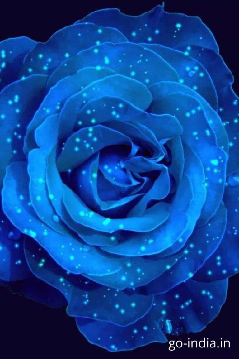 gliterry blue rose