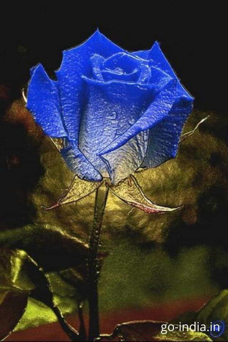 lightning blue rose