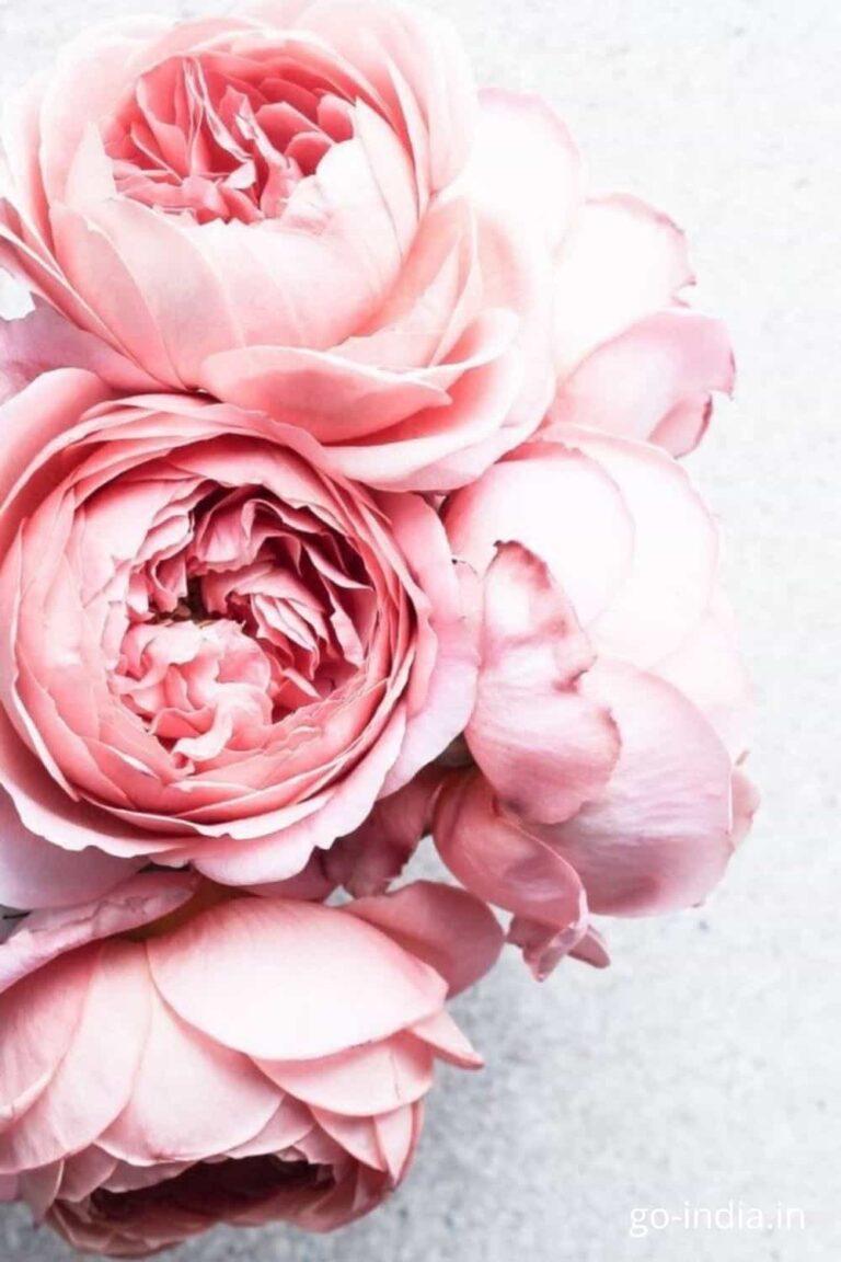 pink rose flower bouque