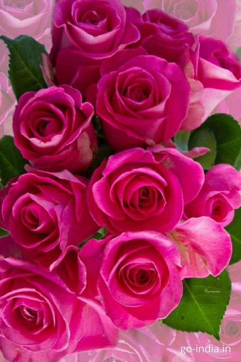 pink rose flower bouquet images