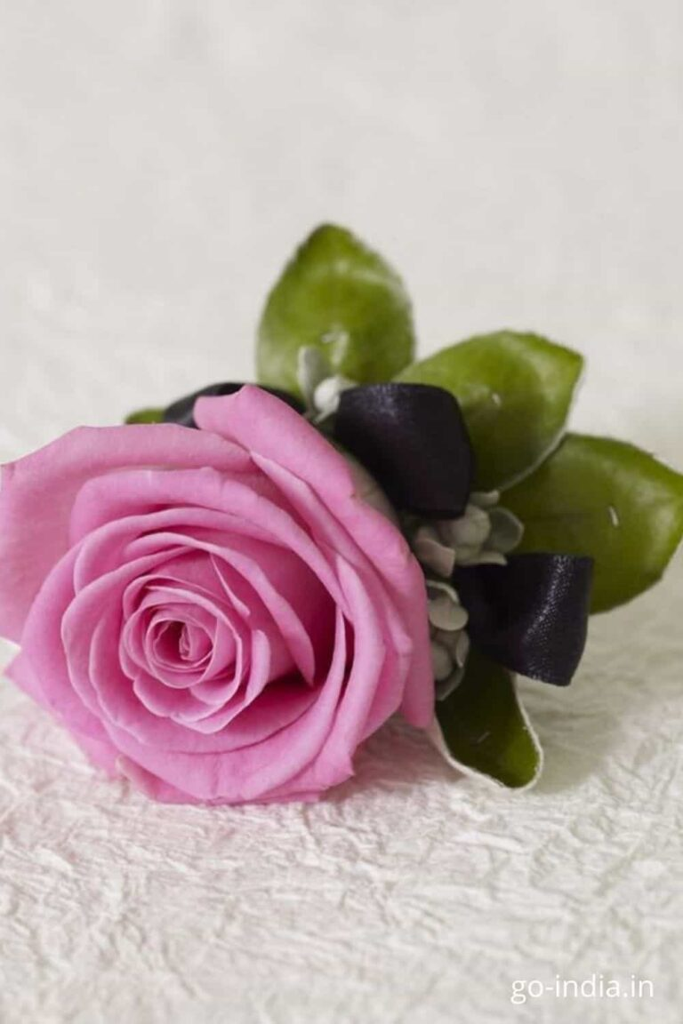 pink rose images to send to your friends