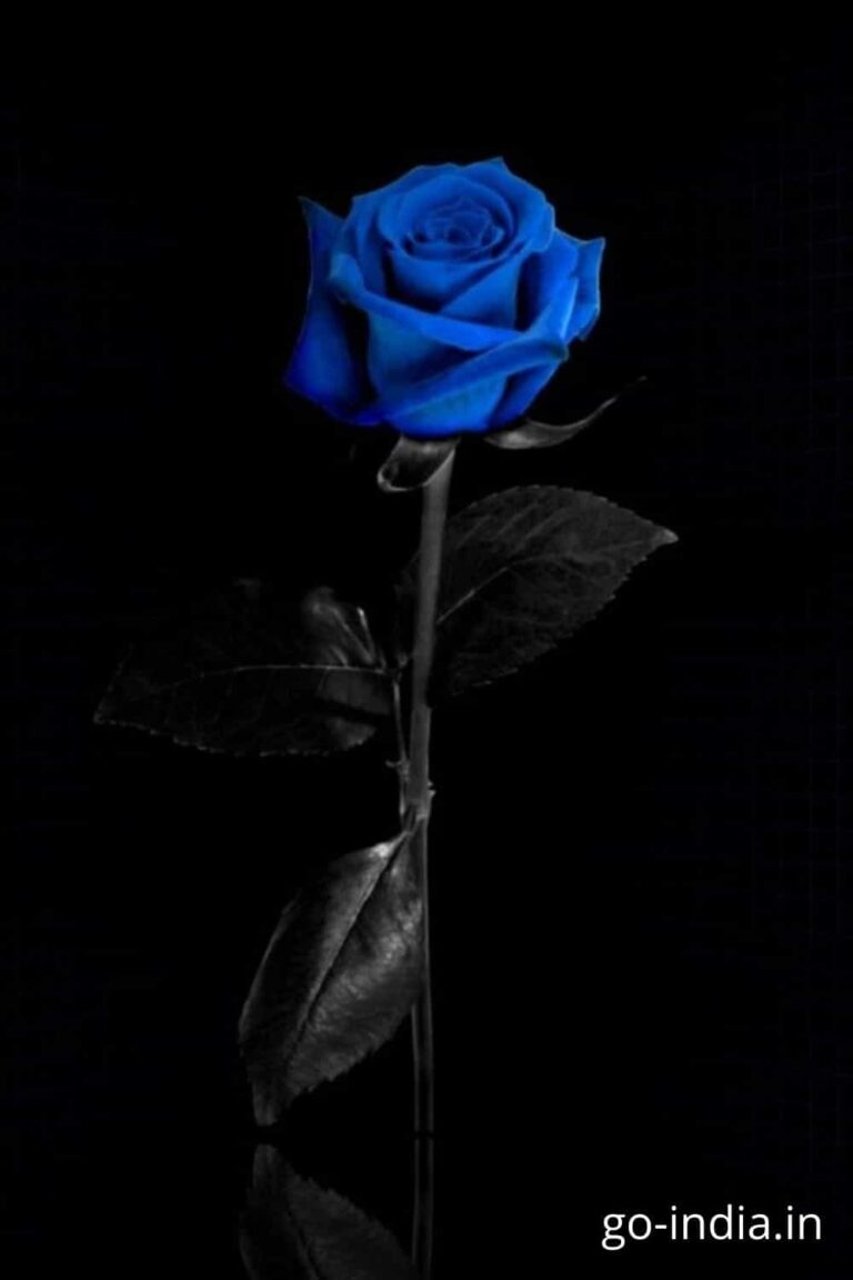 rose blue wallpaper