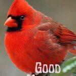 good morning beautiful birds