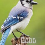 good morning bird images download