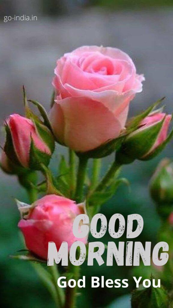 good morning pinl rose