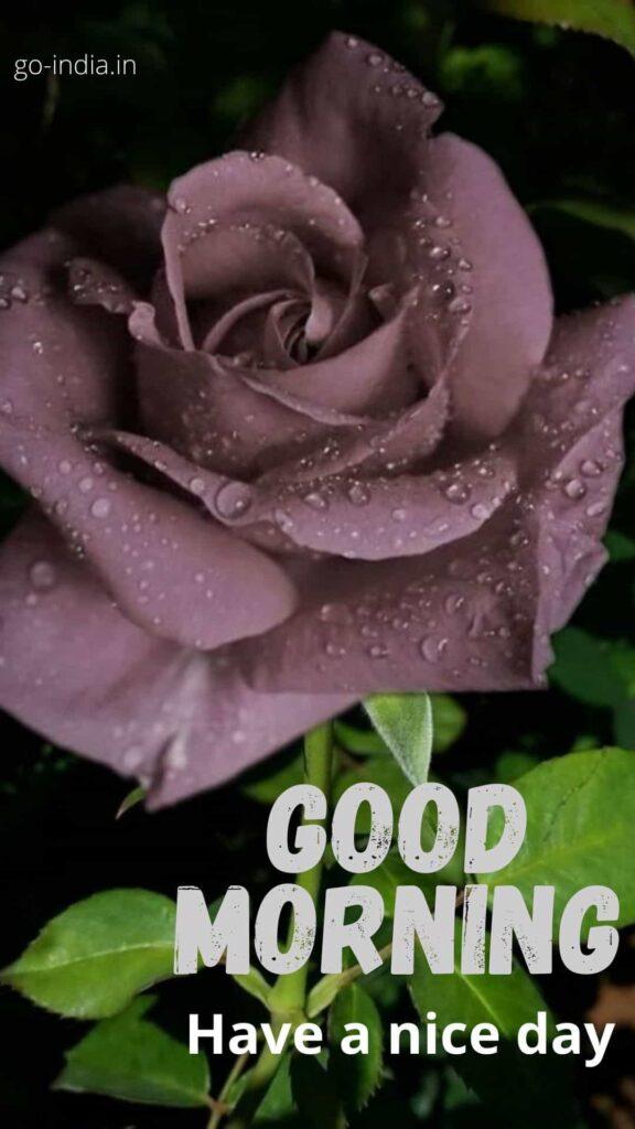 good morning rose 1080p download