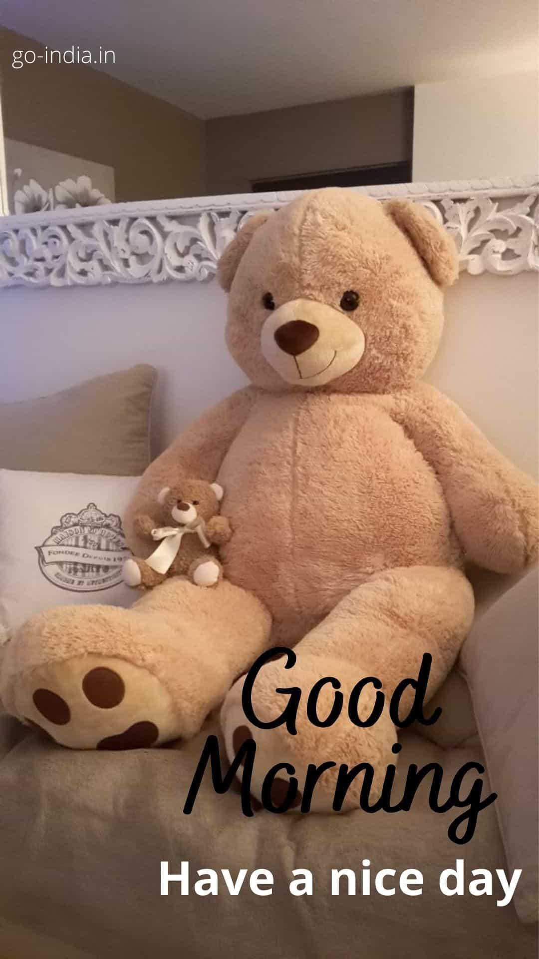 good morning teddy